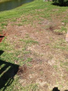 5 Types Of St  Augustine Grass Every Homeowner Should Know